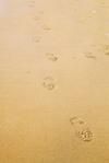 Feet_in_sand_mk2